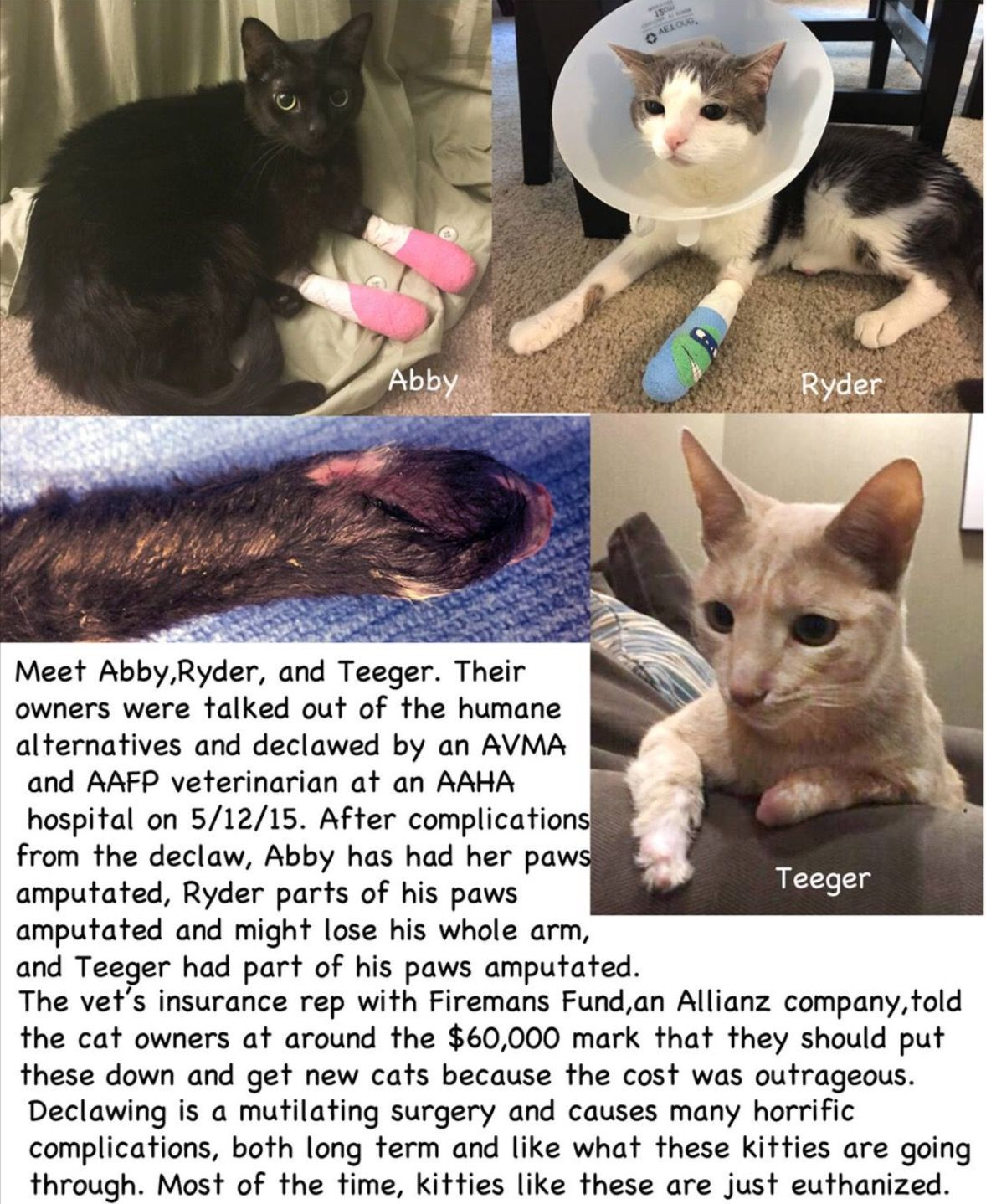 Pin By Cassywantsclaws On Declawing Amputation Vet Student