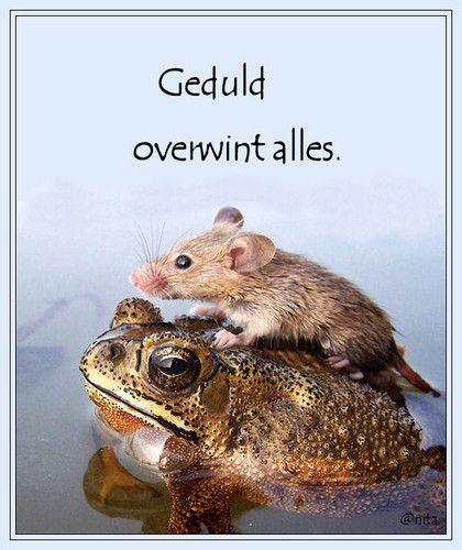 hyves spreuken SPREUKEN EN WIJZE GEZEGDEN. , Spreuken op dieren plaatjes.   Hyves  hyves spreuken