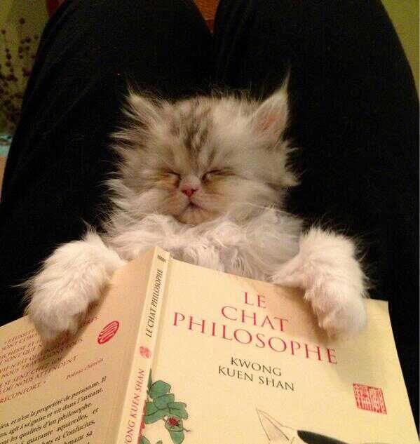 """Résultat de recherche d'images pour """"chat philosophe"""""""