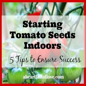 Starting Tomato Seeds Indoors - 5 Tips to Help Ensure Success #gardening