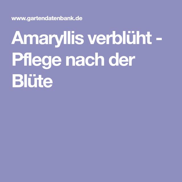 Amaryllis Verblüht Pflege Nach Der Blüte Blumenpflege