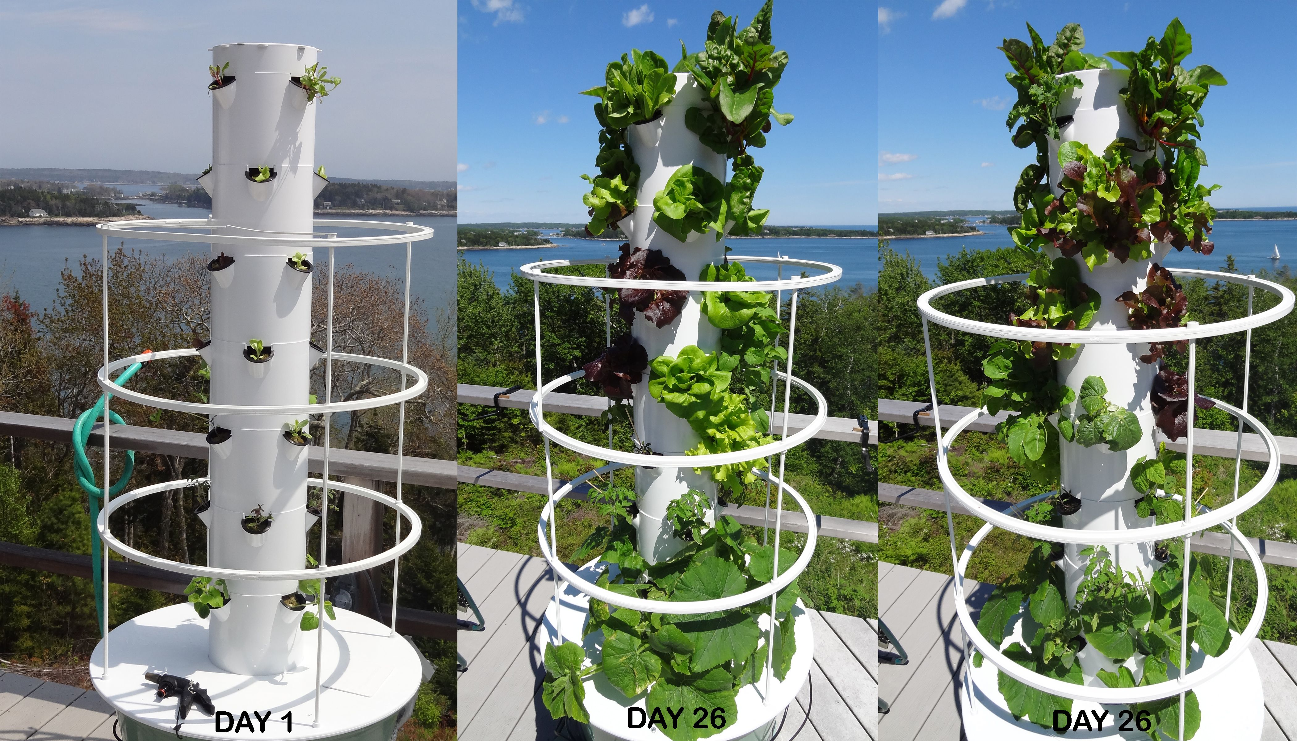 My Aeroponic Tower Garden at Day 26 Tower garden