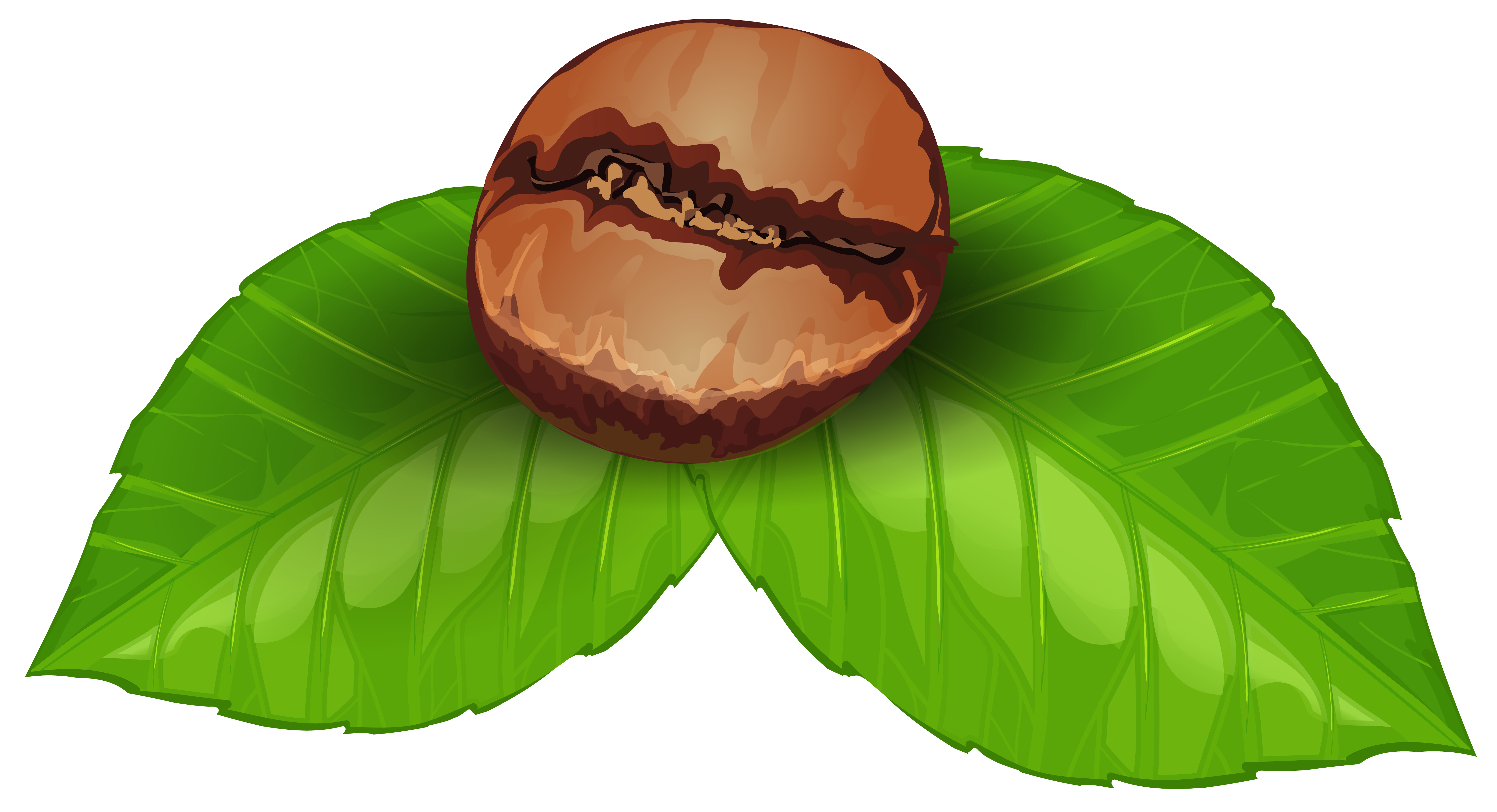 Coffee Bean PNG Clipart Image Hering