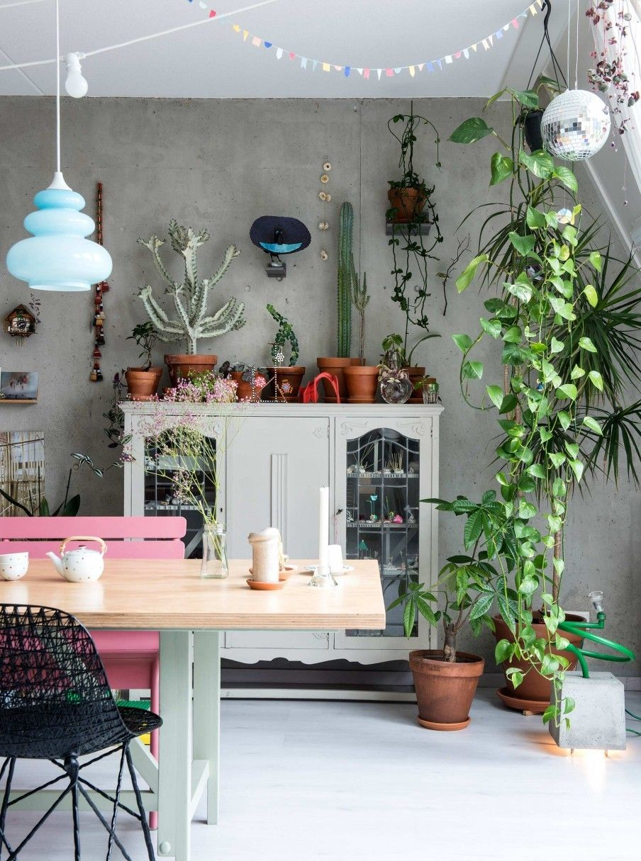 Plants in an atelier home in The Netherlands