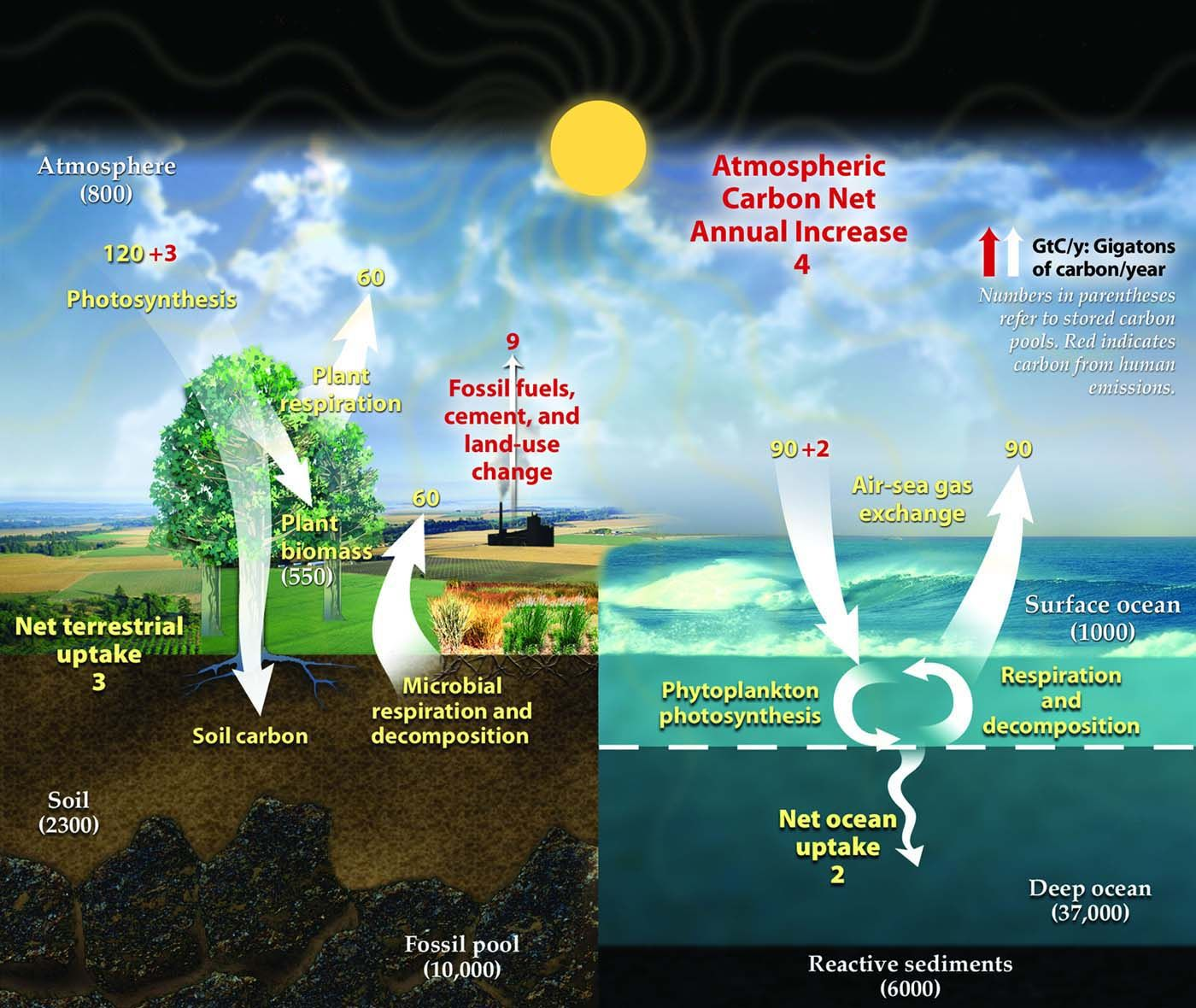 Greenhouse Gases Are Responsible For The Greenhouse Effect