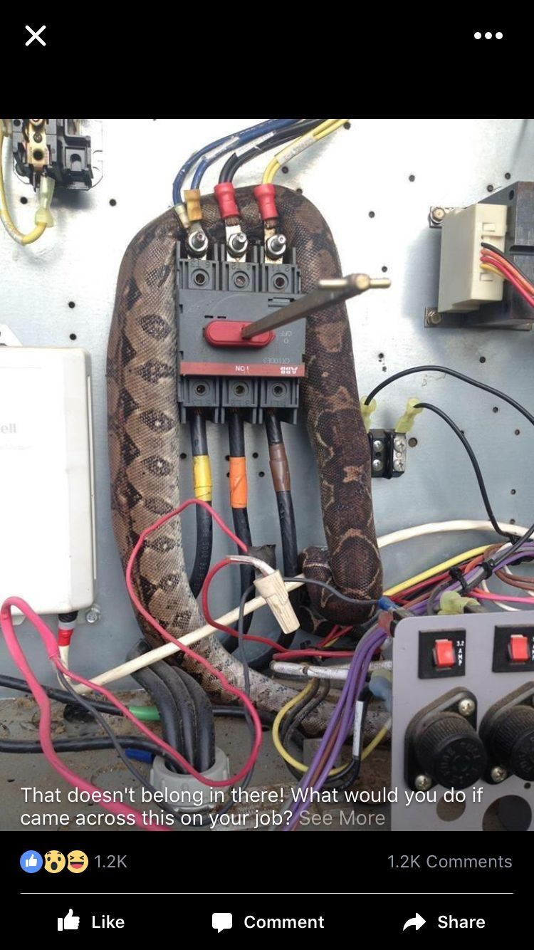 Pin by Felton GREEN on OMG (With images) Electrician