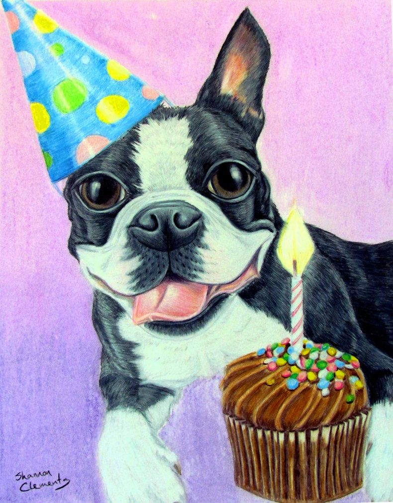 Shannonclements Deviantart Com Birthday Boston Terrier Happy Birthday Dog Boston Terrier Terrier