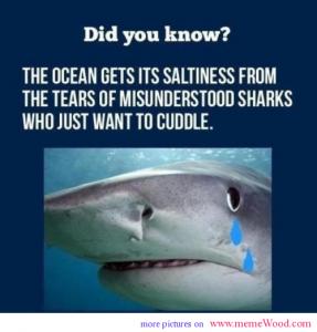 Fun Animals Quotes Shark Week Misunderstood Shark Sharks Funny Internet Funny