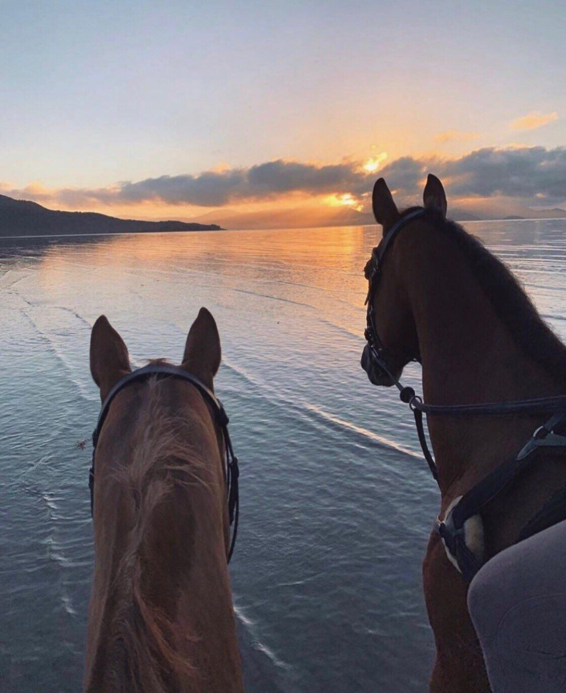Á´Š Á´€á´…ɪᴏʀ On En 2020 Photographie Equestre Passion Cheval Jolis Chevaux