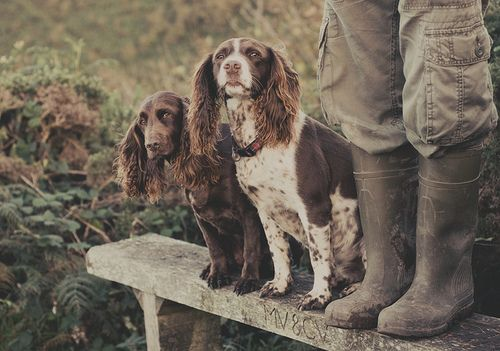Spaniels on a bench. Bench monday ~ autumn's in the air by Suzi Marshall.