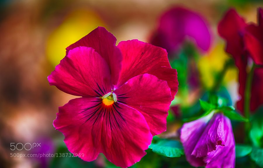 Spring colors by fgombert. @go4fotos