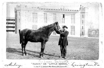 Stonewall Jackson's Horse, Little Sorrel. Various sources claim he's a Morgan, a Virginia Riding Horse, or a Thoroughbred.