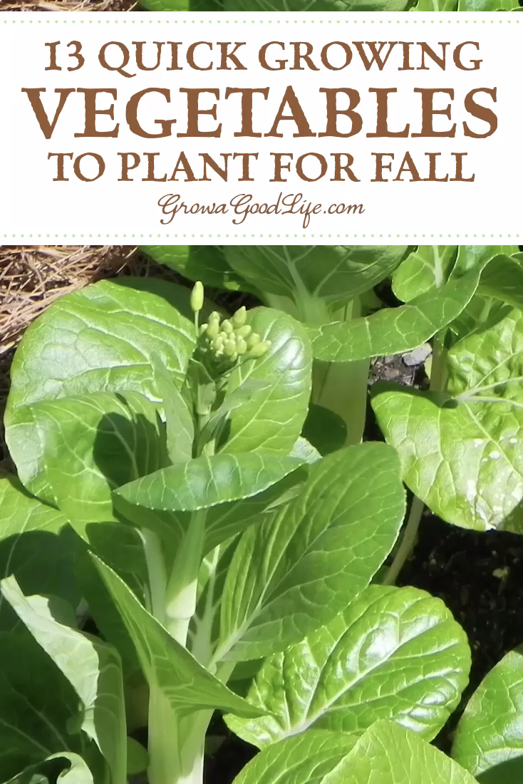 Photo of Quick Growing Fall Vegetables