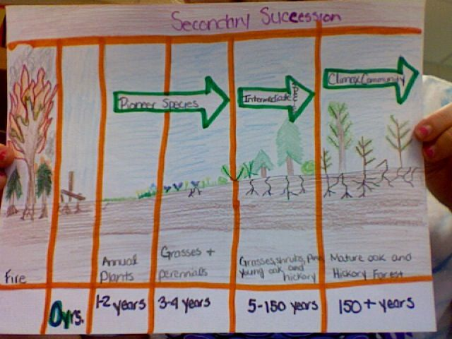 Primary & Secondary Succession Activity | 7th - Impacting Earth ...