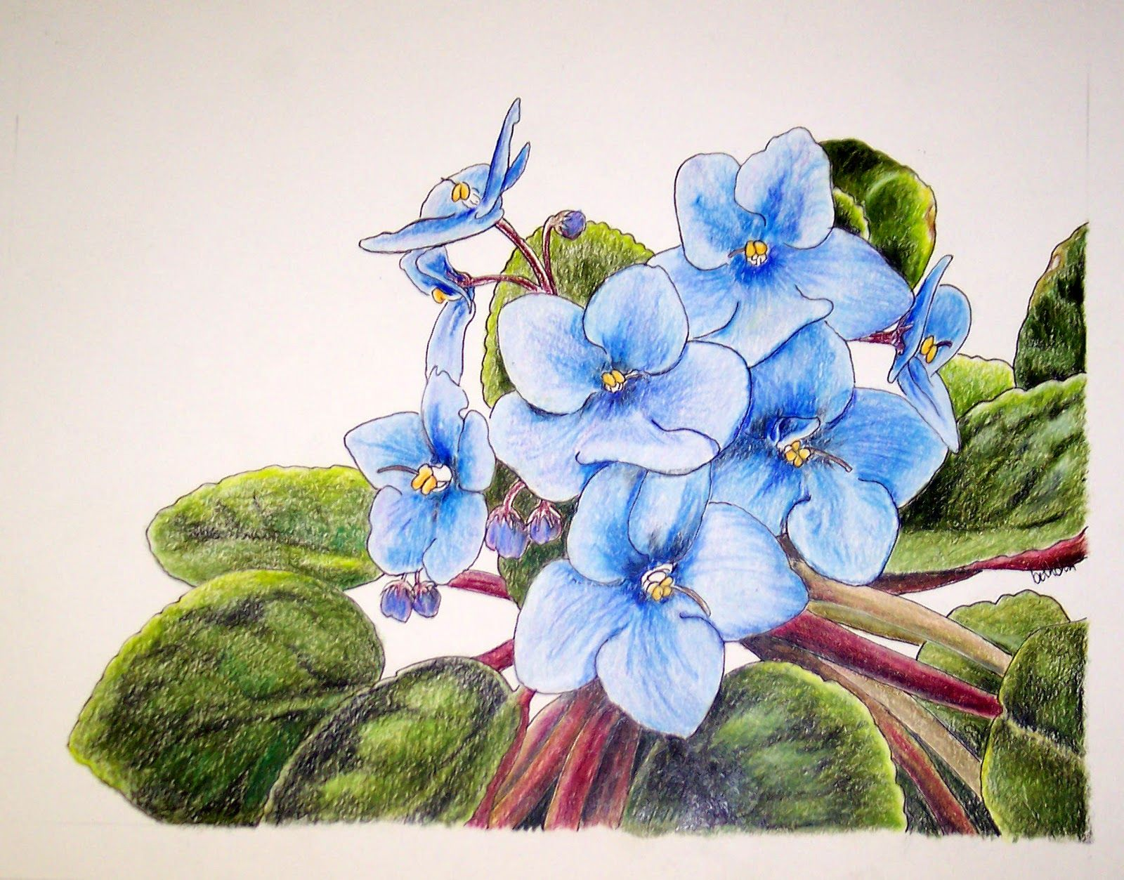 Images For > Colored Pencil Flowers Simple African