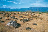Afloramientos de cantos rodados en el borde de la terraza de acarreo de Chinauta. Durante la época seca, la vegetación presenta condiciones extremas de estrés hídrico.