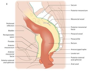 Above anatomy diagram of anus and rectum can not