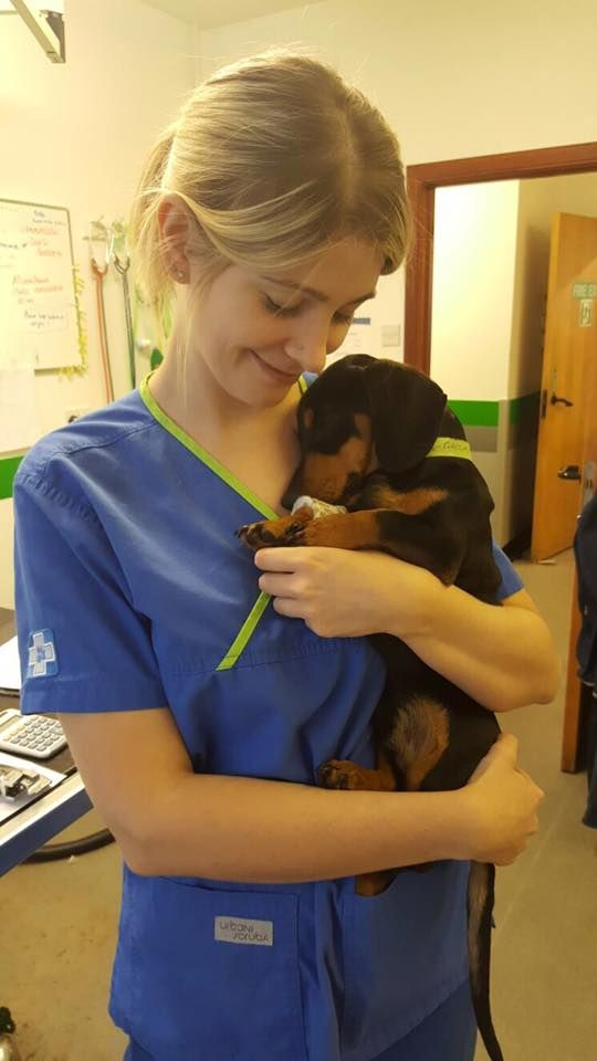 Someone Having A Little Snooze Puppies Cute Vets Veterinary Cute