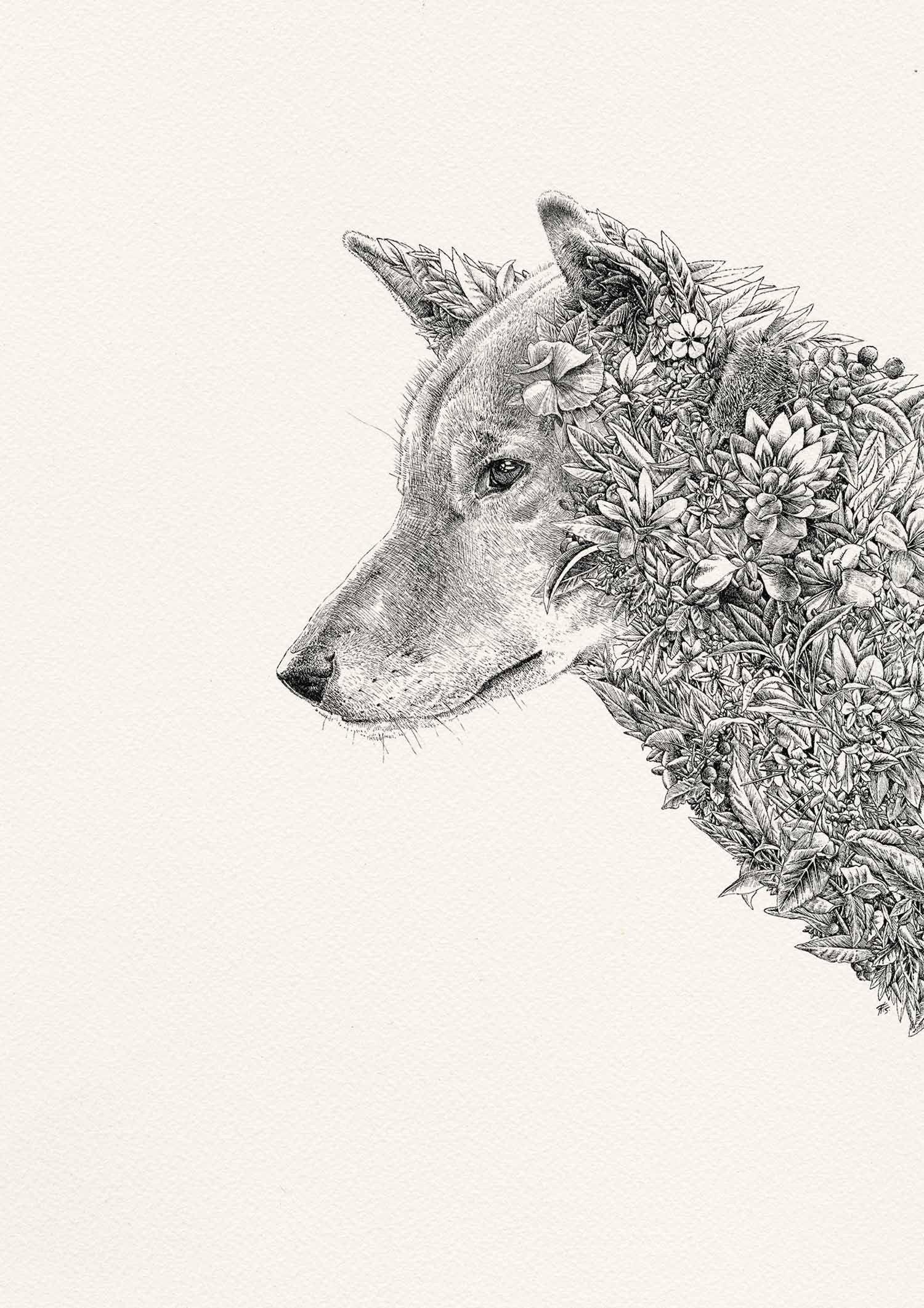 Dingo, by Nathan Ferlazzo