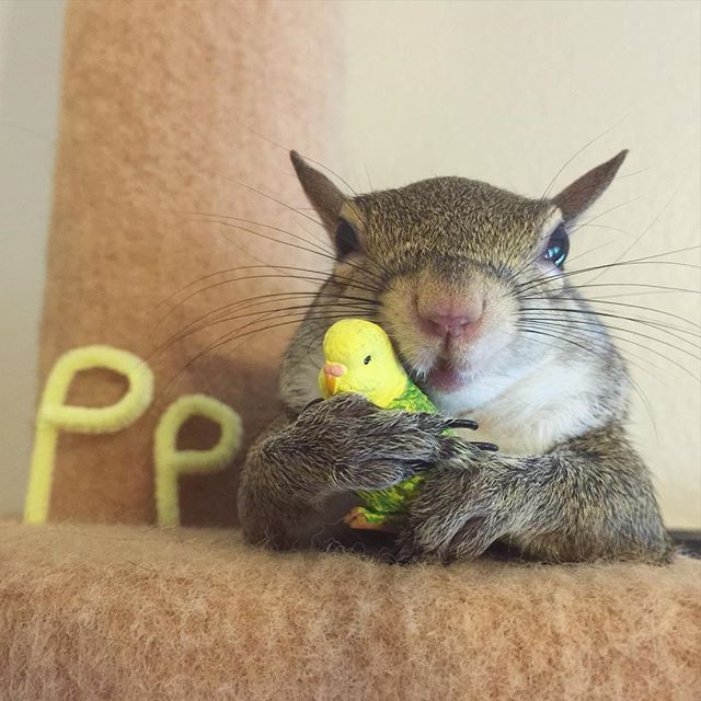 Photogenic Rescue Squirrel Is A Huge Fan Of Her New Life - (thedodo)