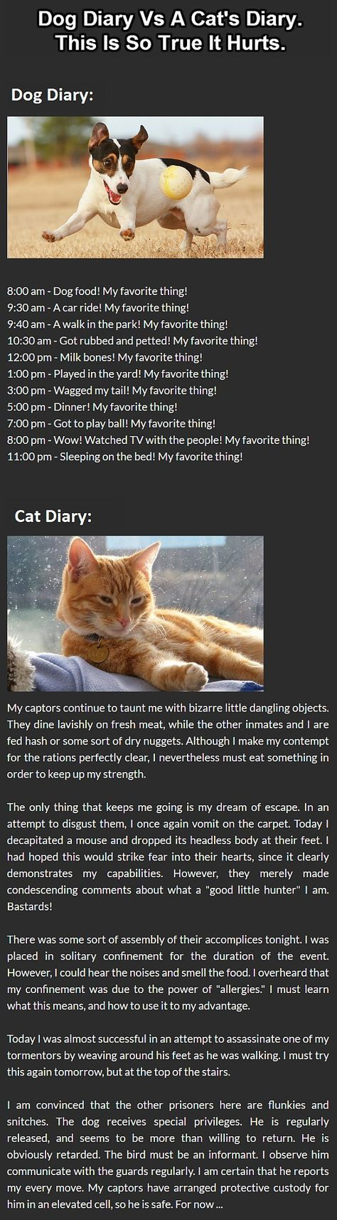 Cats Vs Dogs This Is The Best Diary Comparison Ever Cat Vs Dog