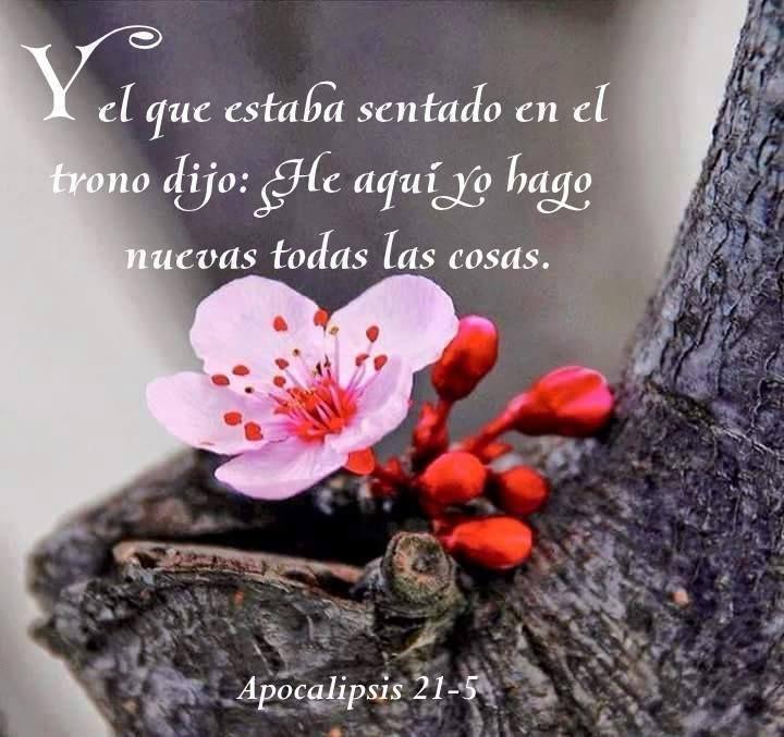 Y El Que Estaba Sentado En El Trono Dijo He Aquí Yo Hago Nuevas Todas Las Cosas Apoc 21 5 Oración Para Hoy Mensajes De Jesucristo Promesas De Dios