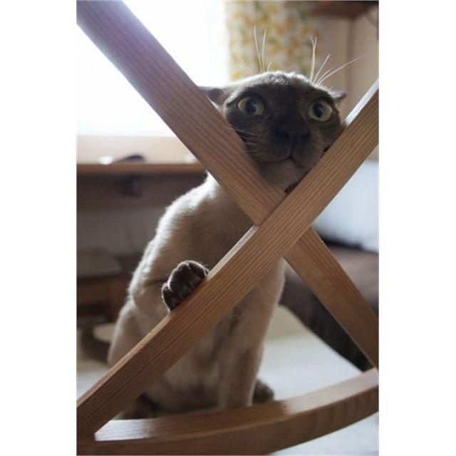 #cat #cats #catsagram