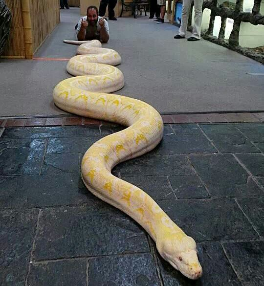 That S A Big Snake Huh With Images Pet Snake Pretty Snakes