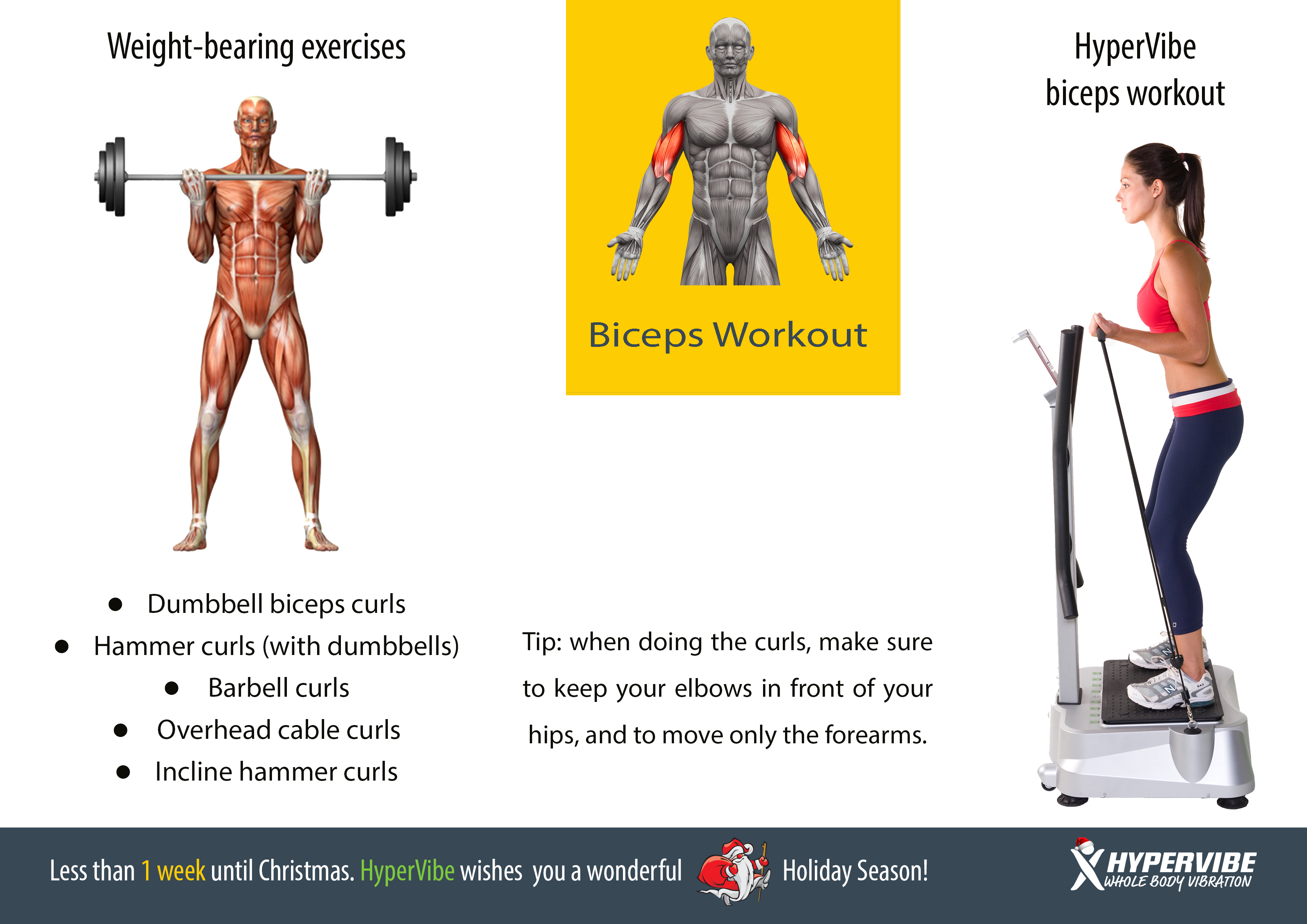 Biceps Workout Exercise Fitness Wbv Whole Body  -2154