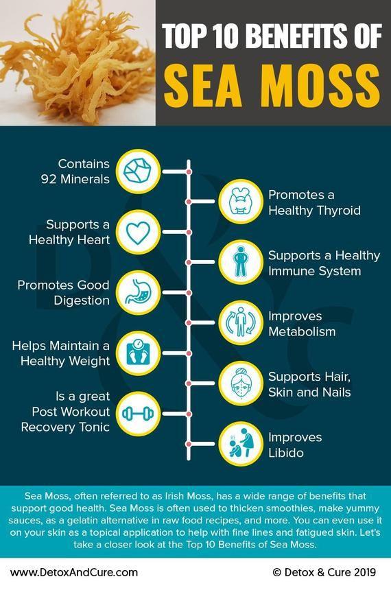 Organic Irish Sea Moss Capsules Sea Moss Moss Healthy Thyroid