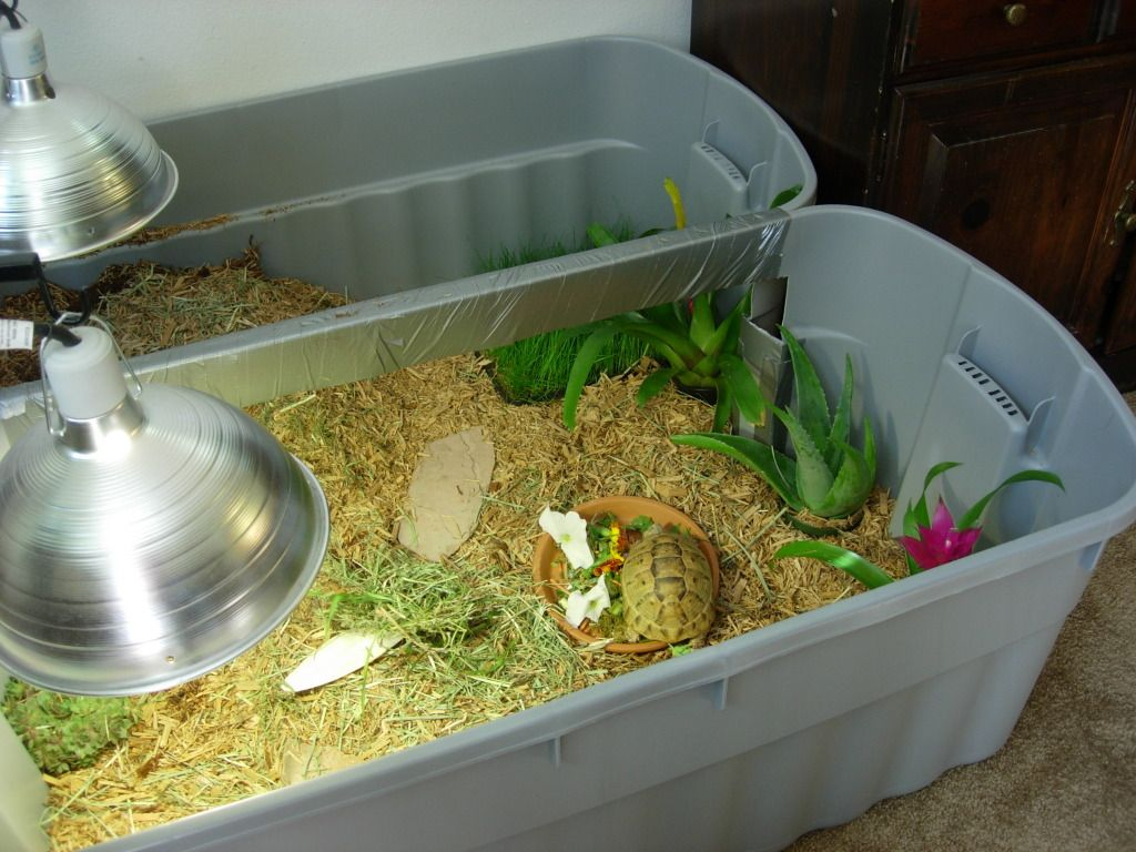 Cleaning the enclosure | Tortoise Forum