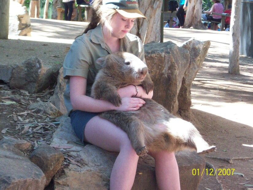 Wombats are sooo cute. Just like big teddy bears! Big