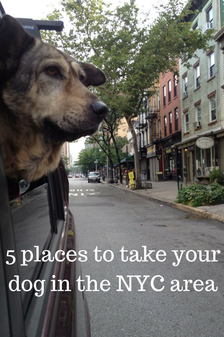 the 5 best dog friendly parks and day trips for the nyc area these rh pinterest com