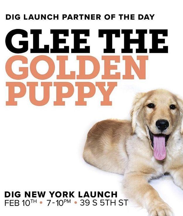 Hunde dating app