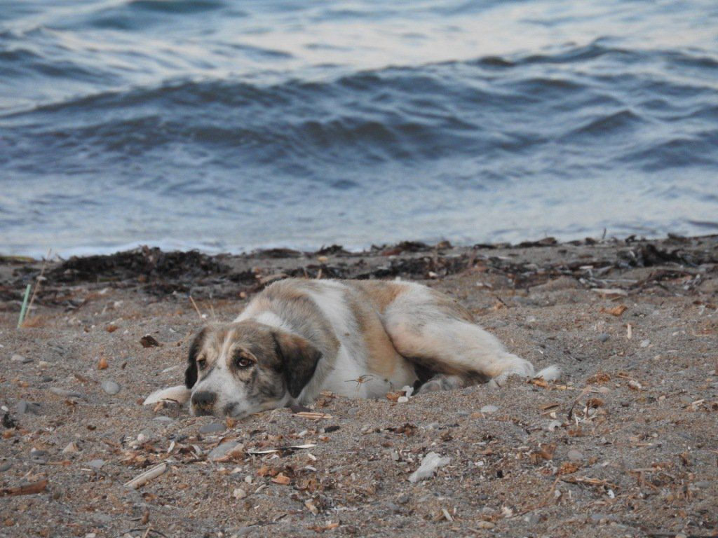 Vacationer Finds Lonely Dog On Beach In Greece Who Transforms Into