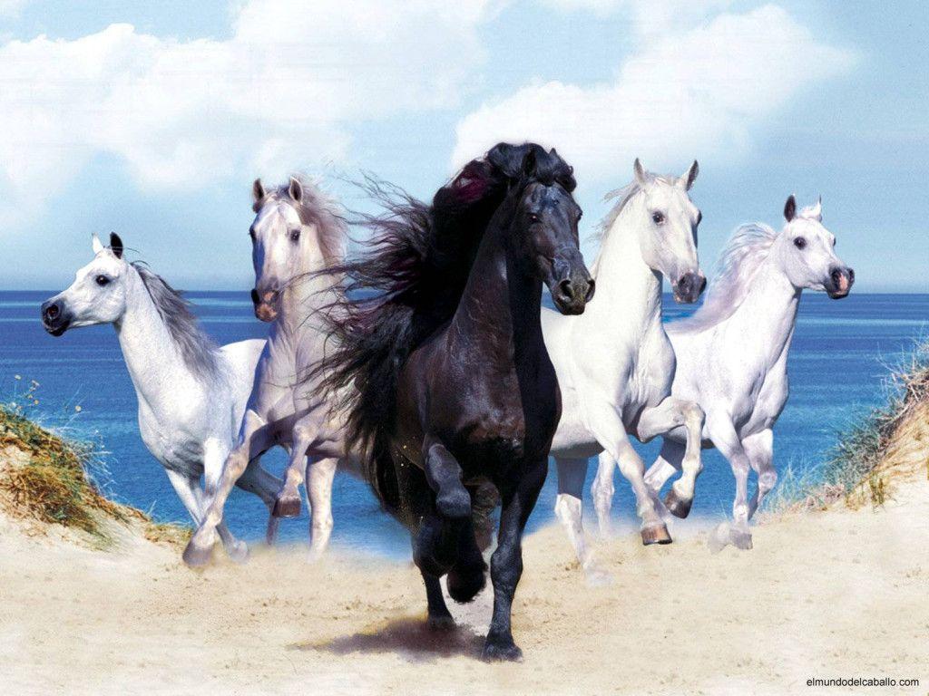 Popular Wallpaper Horse Art - a40b850dbc68c2cbd3d1838c03c6482f  Image_8310098.jpg