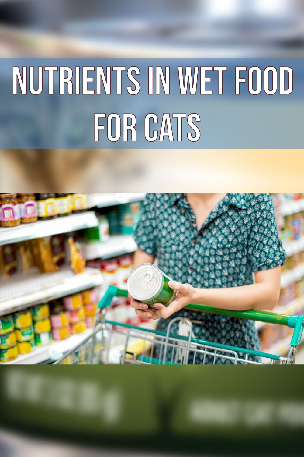 Wet Or Dry Food For Kittens Mypetguides 2020 In 2020 Best Cat Food Kitten Food Cat Food