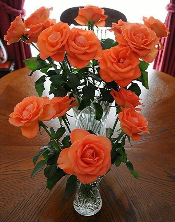 Pin By Magda Wolfaardt On Flowers Colorful Roses Orange Rose