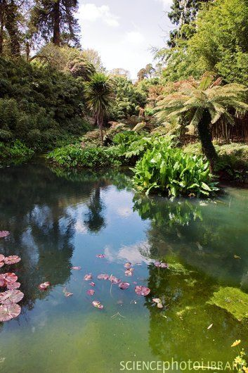 Gärten In Cornwall the lost gardens of heligan cornwall beautiful spectacular