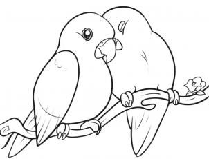 How To Draw Lovebirds Step 10 Bird Drawings Love Birds Drawing Drawing Pictures Of Birds