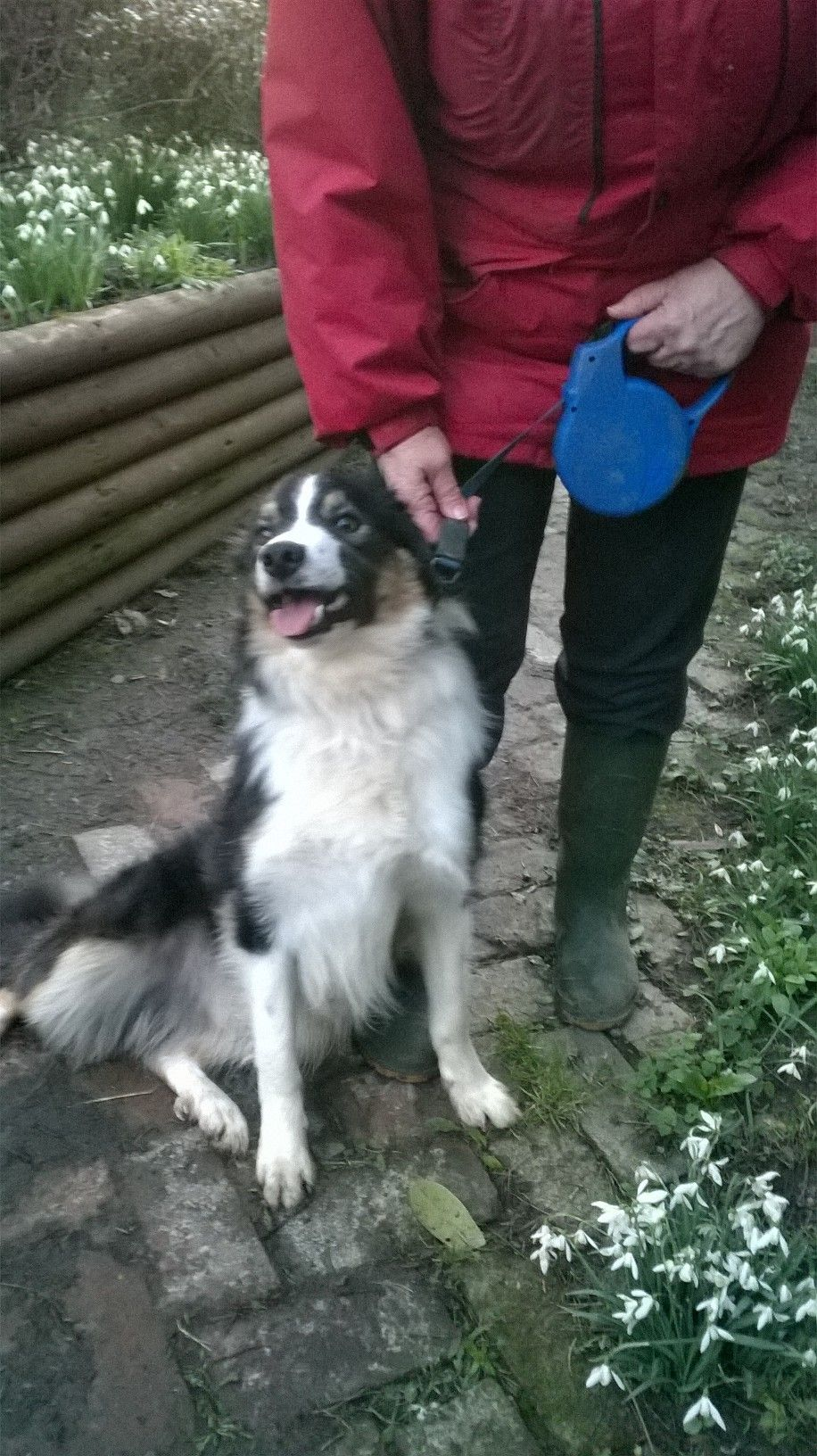 Beck Is A Gorgeous Border Collie Born 2015 Although He Has Only