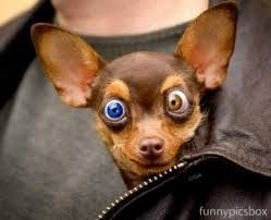 Big Eyes Cute Funny Dogs Funny Dog Faces Crazy Dog