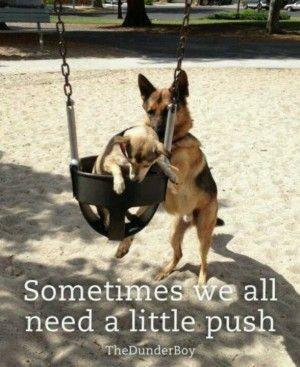 German Shepherd Quotes Funny Dogs Pinterest German Shepherd