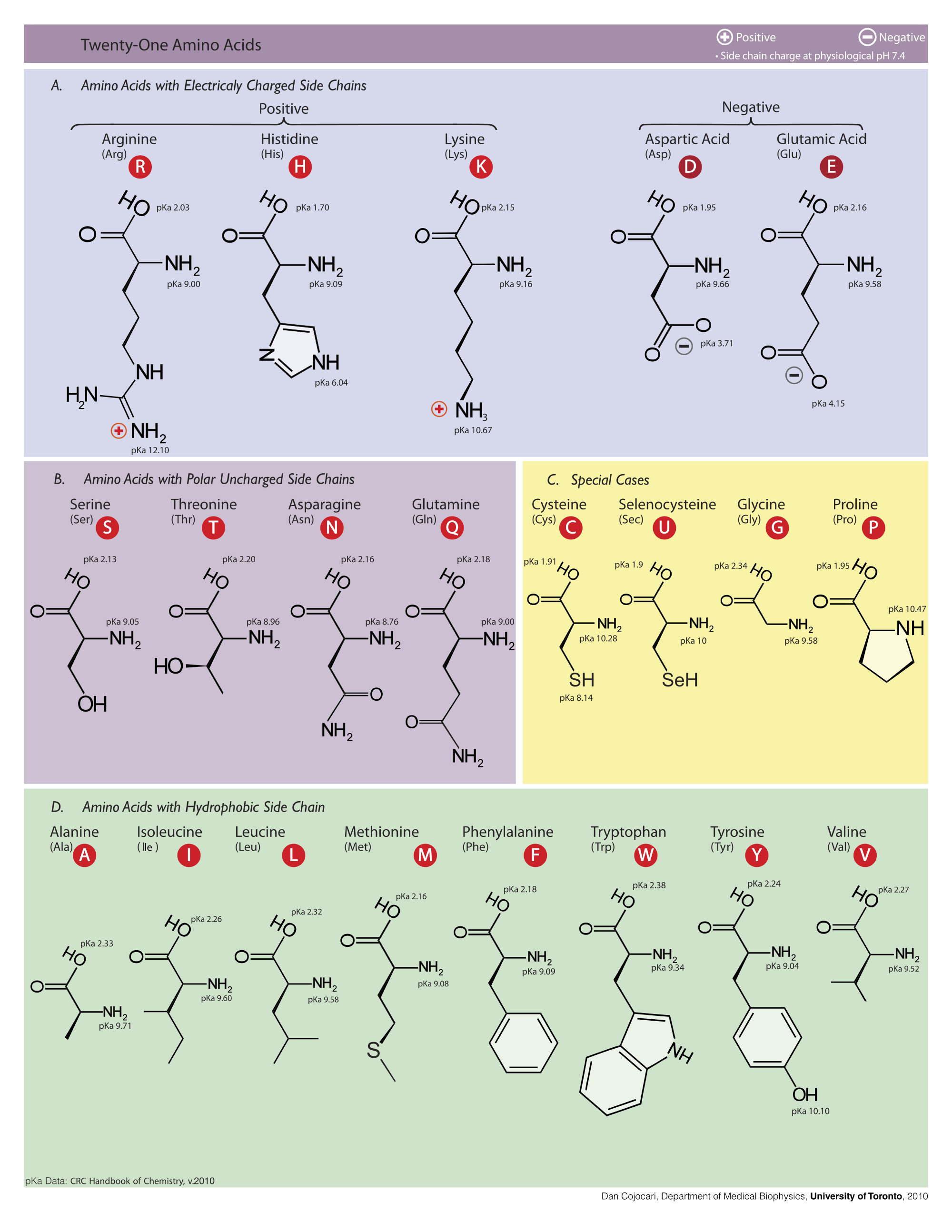 Studying Amino Amino: Amino Acids With PKas Of Most R-groups AND Backbone Groups
