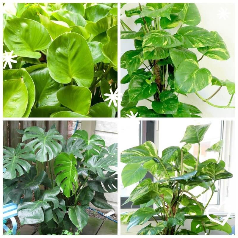 15 Most Popular Houseplants How To Identify And Care Images Identifying House Plants Popular House Plants House Tree Plants
