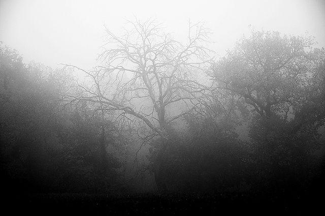 invictus by solitarytraveller, via Flickr