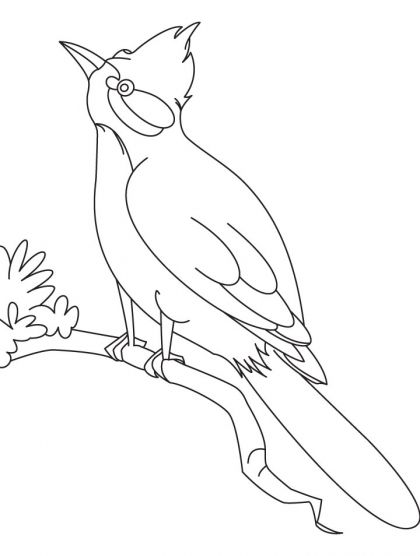 nightingale animal coloring pages. A nightingale bird watching coloring page  Download Free for