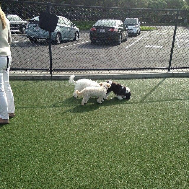 Foster City Dog Park Dog Park Dogs Foster City