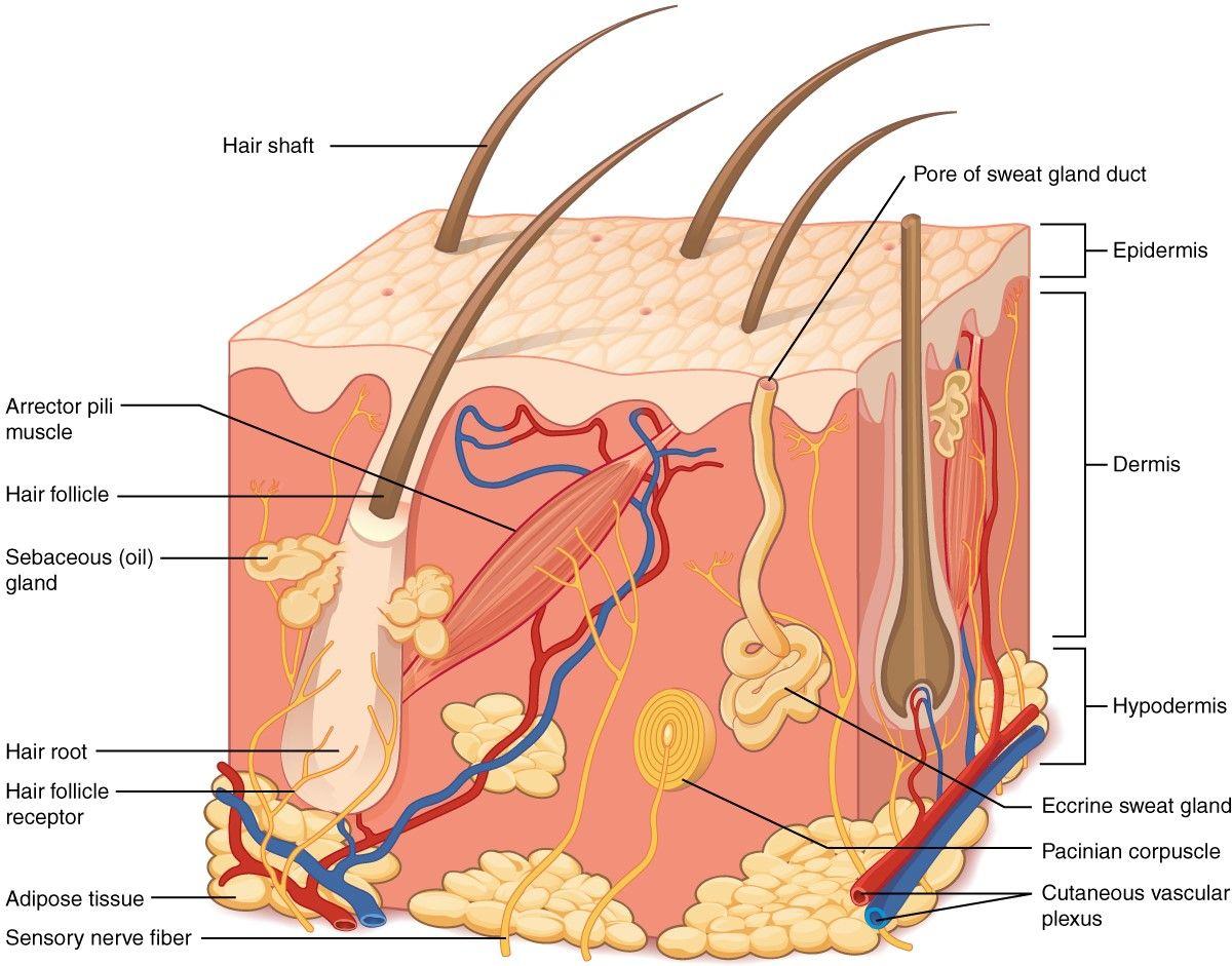 Pin de Wholistic Dermatology en #MythVersusFact | Pinterest | Huyendo