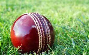 cricket - Google Search